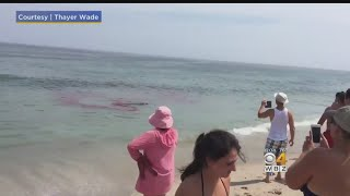 Shark Attacks Seal Near Surfers Off Cape Cod