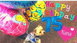 Puppy gives Nana Balloons for her Birthday!! (Too Cute or Disaster?)
