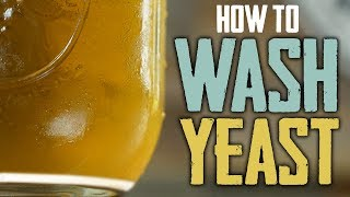How To Harvest and Wash Yeast for Homebrewing