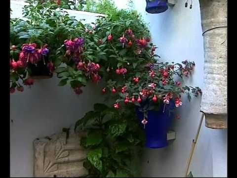 El Jardinero En Casa Nos Vamos De Patios Youtube