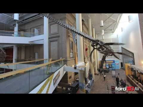 Denver Museum of Nature And Science Dinosaurs Denver Museum of Nature And