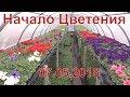 Петуния цветёт 7 мая Тепличный бизнес mp3