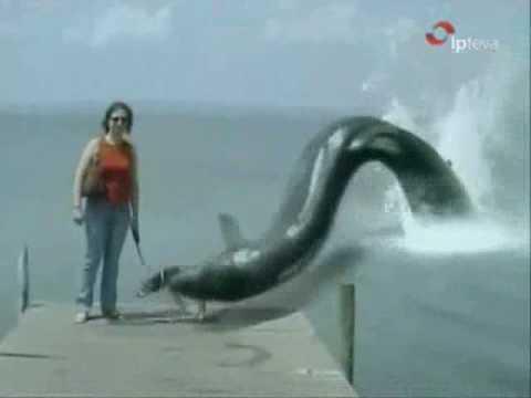 مخلوق غريب يخرج من البحر ويأكل كلب.wmv