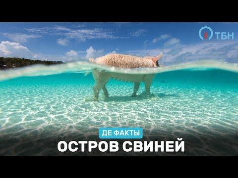 «Де факты от де Юры»: Пляж свиней. Эфир от 16.09.2016