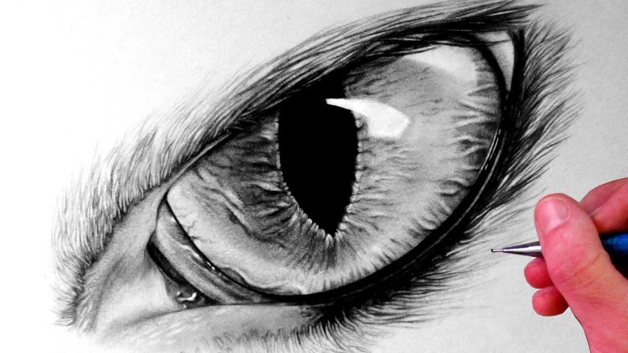 How to Draw a Cat Eye - YouTube