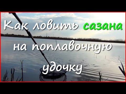 видео ловля сазана ранней весной