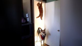 FUNNY DOGS are here to MAKE YOU LAUGH - Funny ANIMAL compilation