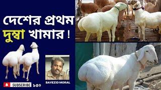 Dumba farm, মতিঝিলে ৪টি দুম্বা থেকে ৪ বছরে ১৭টি হয়েছে, ১টি দুম্বার দাম আড়াই লাখ টাকা الزراعة دومبا