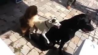 short funny clips,funny movies with best animals   video dailymotion