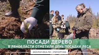 В Ленобласти отметили день посадки леса