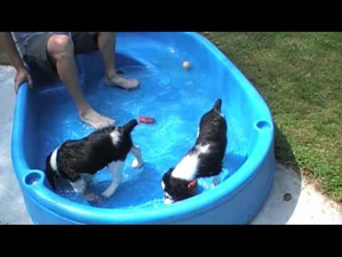 Taz and CJ (Tots) 1st time in baby pool Video