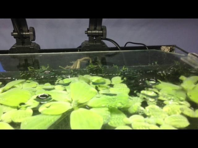 Akwarium 19l opis budowy i działania filtra