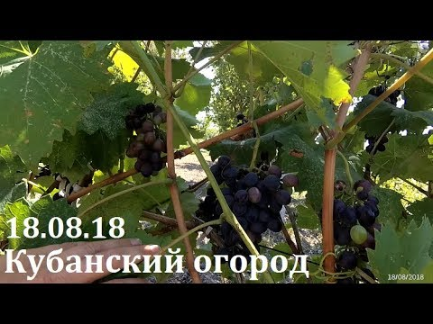 Перемены на мамином огороде. ст. Гостагаевская
