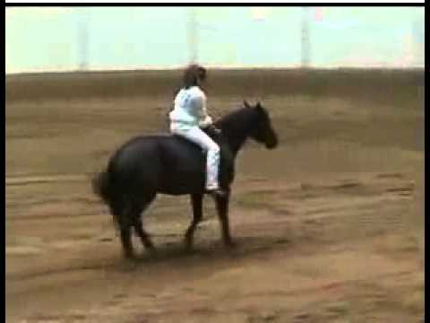 Stacy Westfall Amazing Horse Ryding video