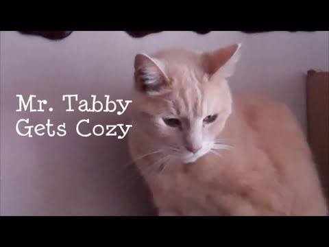 Mr  Tabby Gets Cozy
