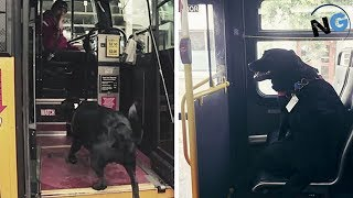 This Smart Dog Takes The Bus All By Herself Every Day To Go To The Dog Park