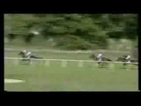 Funny Horse Race