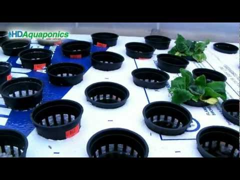 HD Aquaponics Ep.30 - Advanced Barrel Aquaponics, swirl filter, floating raft, u-siphon, indoor
