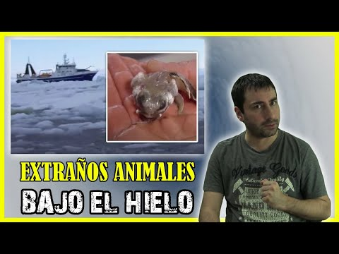 Las Increíbles Criaturas que se Hallaron a 5.000 Metros por Debajo de la Antártida