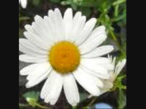 Karine Polwart - Daisy