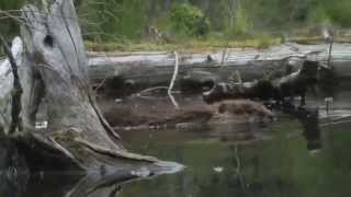 Methow Valley Beaver Project