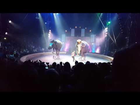 Цирк Кобзов.Выступление слонов.KOBZOV CIRCUS.