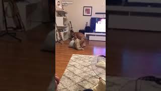 FUNNY DOG COMPILATION