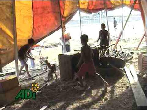Transporte de animales en Circos