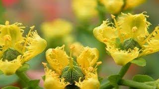 وصفات السذاب فيجن لعلاج الروماتيزم والجهاز الهضمى وفتح الشهية | خلطات أعشاب