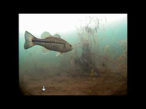 Underwater Camera Footage - Ice Fishing on a clear water lake - January 7th, 2012