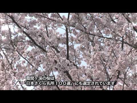 池田町 「霞間ヶ渓」 ~桜~