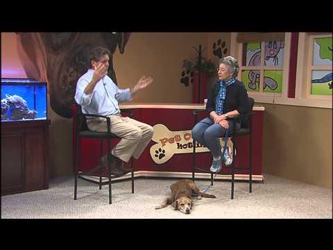 0 Pet Owners Hotline: Obedience Club of Daytona Beach