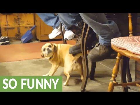 モジモジクネクネダンスをする犬が変過ぎる