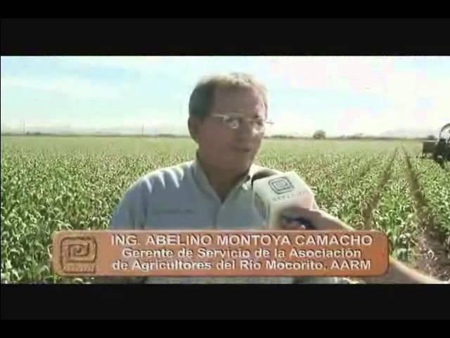 Validación de alternativas de fertilización integral (orgánico - química) para maíz