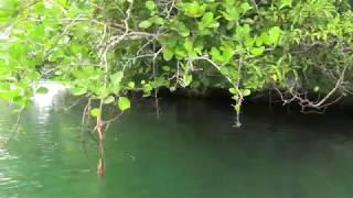Palau  Micronesia Nikko Bay Kayaking  Paul Ranky HD Video