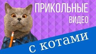 Прикольные видео с котами