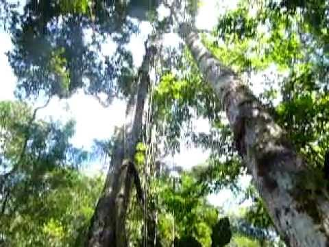 Ayahuasca en Tarapoto Peru Jungle Selva