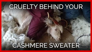 PETA Exposé Reveals Cruelty Behind Your Cashmere Sweater