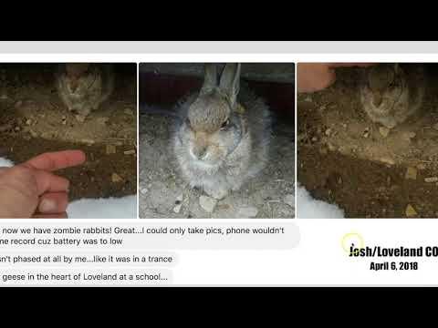 More NEW video of strange wildlife behavior - NEW map at website / mrmbb333.com