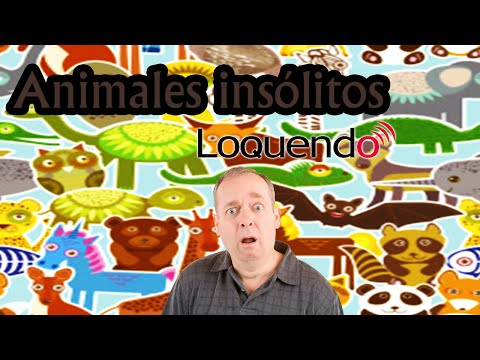 Animales insólitos