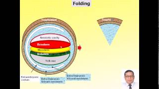 Magdy Said Anatomy Series,General Embryology,13- folding