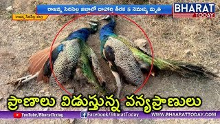 Sunstroke Effect on Birds And Animals | Heavy Temperature In Telangana | Bharat Today