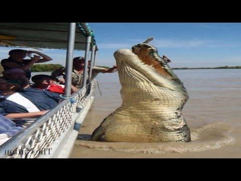 Top 5 World's Biggest Crocodiles in the World