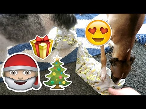 Christmas Day & Ear Candles! ♡ #Vlogmas Day 160, 161, 162