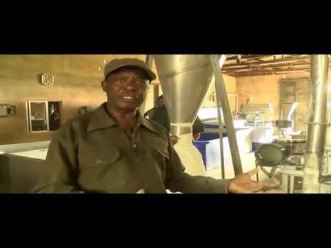Cassava Processing