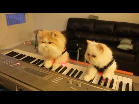 Kitten Duet: Spooky Halloween Music on Keyboard Piano Music Videos
