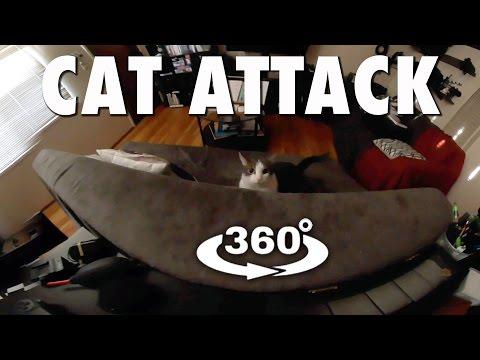 CAT ATTACK (360° 4K VR)