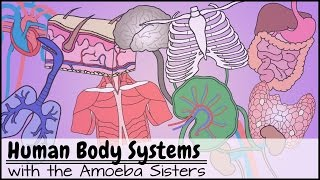 Human Body Systems Functions Overview: The 11 Champions (Updated)
