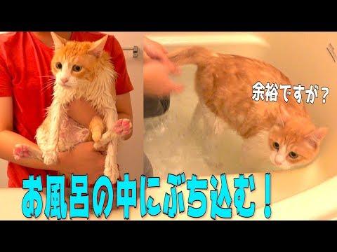 お湯の入ったバスタブに猫を入れて水責めしてみた!!