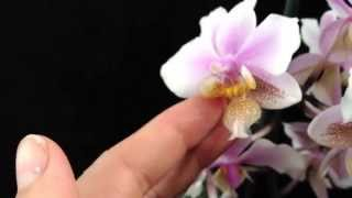 3 new blooming species orchids !!! ( be excited)